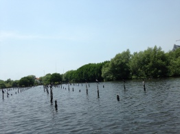 Going around the Mangrove Forest
